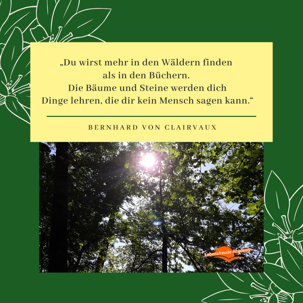 """""""Du wirst mehr in den Wäldern finden als in den Büchern. Die Bäume und Steine werden dich Dinge lehren, die dir kein Mensch sagen kann."""" – Bernhard von Clairvaux"""