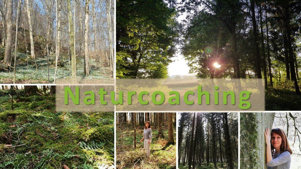 Naturcoaching - Lebensfreude-Academy
